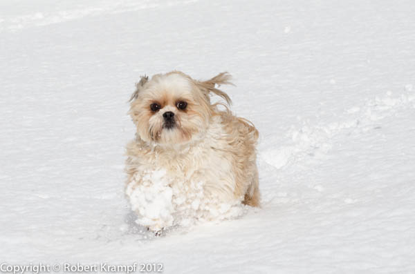 Junie Moon in snow