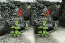 stereo image of flower